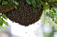 Swarm Stock Image