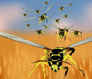 Swarm. A swarm of  wasps Stock Photo