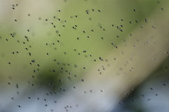 Swarm Royalty Free Stock Photos