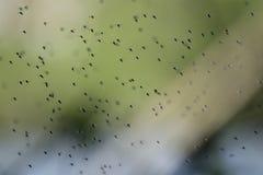Swarm Royalty Free Stock Photos