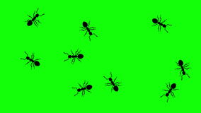 Swarm of ants, CG animated silhouettes on green screen, seamless loop