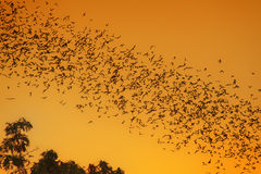 Swarm of Bats Royalty Free Stock Photos