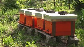 Swarm of bees and beehives stock video footage