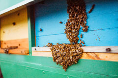 Swarm of bees fly to beehive Stock Image
