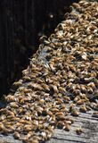 A swarm of bees on a wooden deck