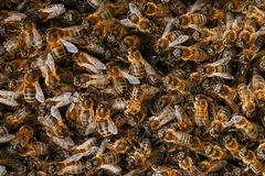 A swarm of bees on the hive. Many bees in the form of texture close-up. Macro. Background stock images