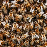 A swarm of bees on the hive. Many bees in the form of texture close-up. Macro. Background stock photos