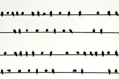 Swarm of birds in a Row. The Photography of birds sitting side by side on electric lines Royalty Free Stock Image
