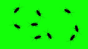 Swarm of cockroaches, CG animated silhouettes on green screen, seamless loop.