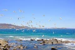 Swarm of flying sea gulls Royalty Free Stock Photos