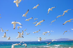 Swarm of flying sea gulls Royalty Free Stock Photos
