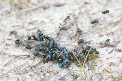 Swarm Of Green Flies. On the sand royalty free stock photos