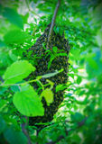 Swarm of honey bees. On a tree Royalty Free Stock Photo