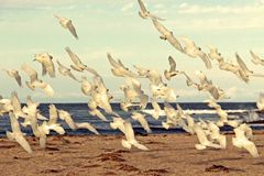 Swarm of Little Corellas Royalty Free Stock Photography