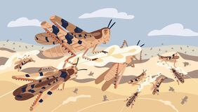 Free Swarm Of Locusts Attacking Plants Field Vector Illustration. Insects Threatening Food Security. Pest Of Rice Meadow Stock Photography - 185140142