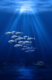 Swarm and shark underwater scene Royalty Free Stock Image