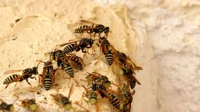 Swarm of wasps stock footage