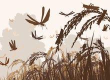 Free Swarming Locusts Royalty Free Stock Images - 88431299
