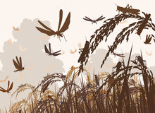 Swarming locusts Royalty Free Stock Images