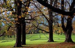 Swath in autumn Royalty Free Stock Photos