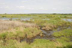 Florida Myakka Wetlands. A swath of Florida marsh, in Myakka State Park Royalty Free Stock Photography