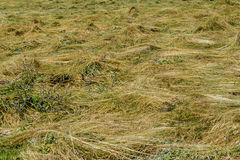 Swath on a meadow Royalty Free Stock Photos