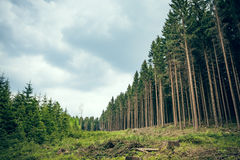 Swathe through the forest Stock Photography