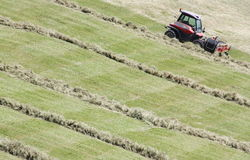 Swather & x28; windrower& x29; och rader av klippt hö & x28; windrow& x29; Royaltyfria Bilder