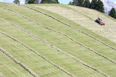 Swather windrower and rows of cut hay windrow Stock Images