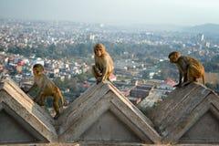 Swayambhunath Fotografia de Stock