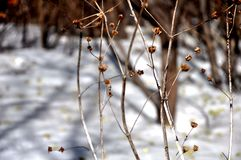 The swaying branches Royalty Free Stock Photography