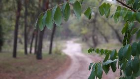 Swaying foliage in the woods. Swinging leaves in rain forest stock footage