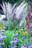 Swaying grass. Grass swaying in the wind. Focus in the middle on the stems Stock Images