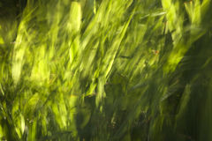 Swaying Grass Royalty Free Stock Images
