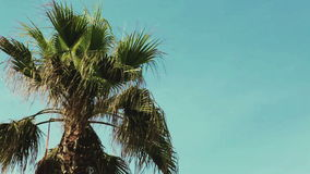 Swaying palm tree against stock footage