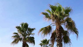 Swaying palm tree against stock video footage