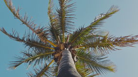 Swaying palm tree against the blue sky. View under stock footage