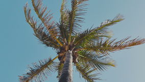 Swaying palm tree against the blue sky stock video