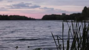 Swaying reeds close up against the evening of Kiev stock footage
