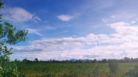 Swaying of tree near agriculture field with blue sky and mountain. View inthe afternoon,Thailand stock video