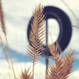 Swaying Wheat. A field of wheat hiding a old propped tire with blue skies Stock Image