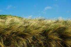 SwayingSummertime-Gras-Einfluss hinter einer Trockenmauer mit blauem Himmel Stockfoto