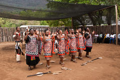 Swazi dancers. Dancers is traditional swazi costumes performing in Mantenga Cultural Village, Kingdom of Swaziland