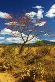 Swazilandia Fotos de archivo