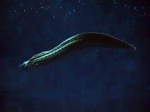 sweaming在蓝色海洋的Murena巨大的蛇 免版税库存图片