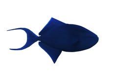 Sweaming azul grande dos peixes isolado no branco Fotos de Stock