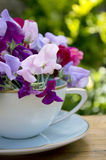 Sweat pea's. Sweet pea flowers in a blue cup Royalty Free Stock Images