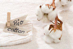 Sweater made of natural fabrics and branch with cotton blossoms Stock Photos