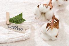 Sweater made of natural fabrics and branch with cotton blossoms Stock Photo