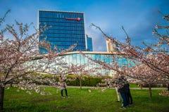 Swedbank and sakura park Royalty Free Stock Images